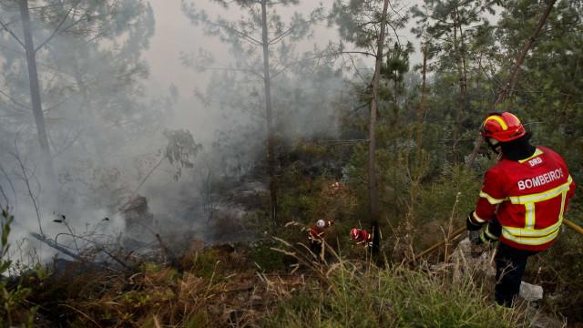 Fogo combatido por 200 bombeiros em Penacova está em fase de conclusão