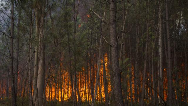 Incêndios não dão tréguas. Há doze mortos e 25 feridos a lamentar