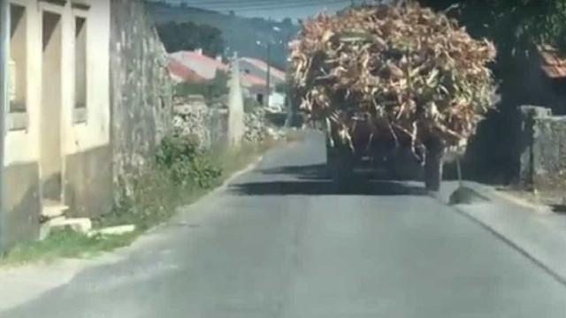 Casal de agricultores filmado a arrastar cadáver de canídeo