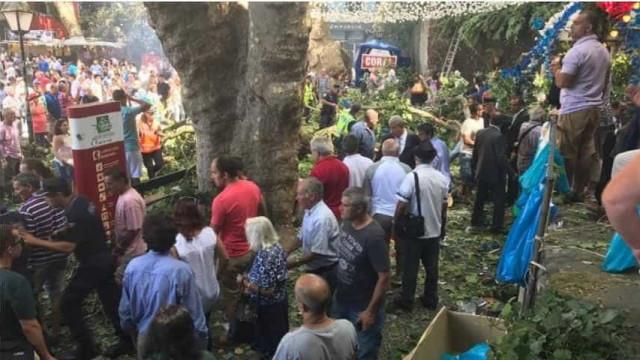 Árvore de grande porte caiu sobre fiéis no Funchal. Há vítimas mortais