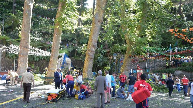 """Parque Municipal do Monte """"não é perigoso"""" mas algumas árvores são"""
