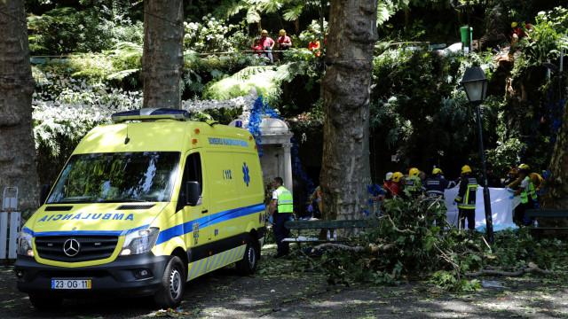 Queda de árvore no Funchal é notícia um pouco por todo o mundo