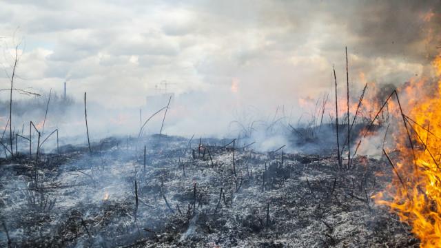 Incêndio em Tomar mobiliza 37 operacionais e um meio aéreo
