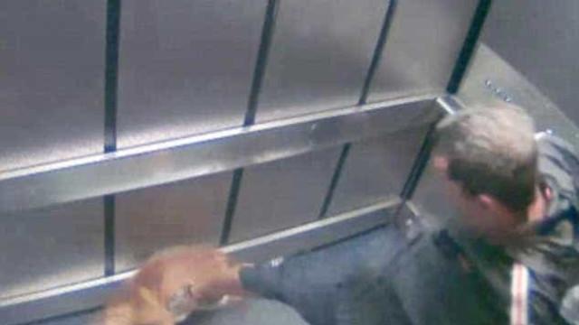 Imagens captam dono a agredir cão com violência. Homem foi condenado