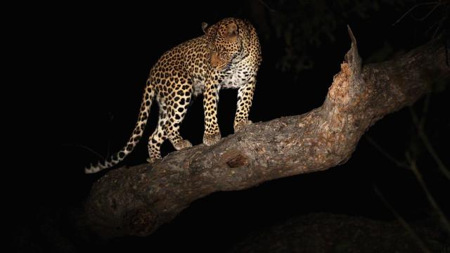 Casal foi atacado por leopardo em viagem de caravana por África