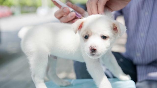 Cinco motivos para manter a vacinação dos seus animais em dia