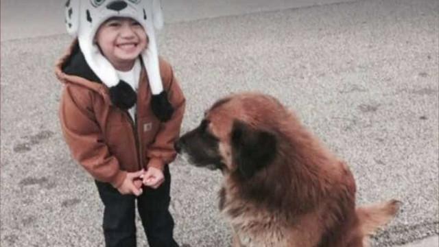Otis: Um cão que ficou famoso e uma história com final feliz