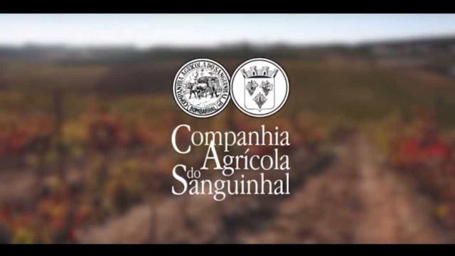 Companhia do Sanguinhal aumenta vendas em 20% com internacionalização