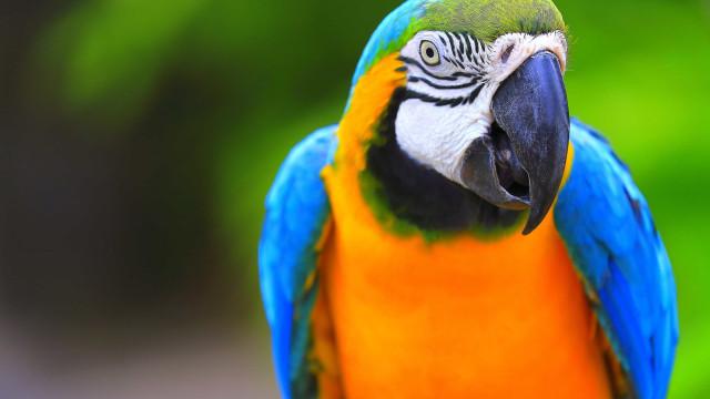 Mulher condenada após papagaio desvendar homicídio
