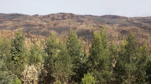 Serviços prisionais preparam plano para pôr reclusos a limpar florestas