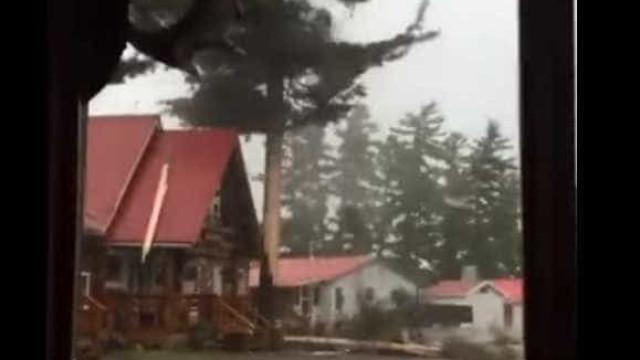Forte relâmpago destrói árvore durante tempestade no Canadá