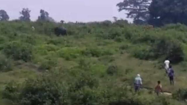 Homem morre esmagado por elefante após tentar tirar selfie