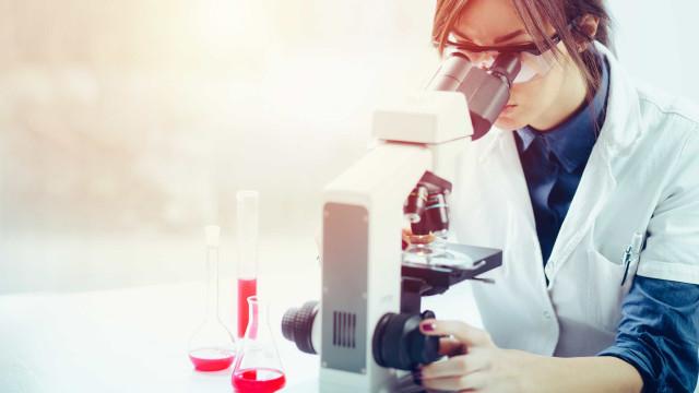 Ovos podem substituir ensaios com técnicas invasivas em mamíferos