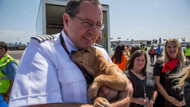 Companhia aérea resgatou 80 cães e gatos de Houston após tempestade