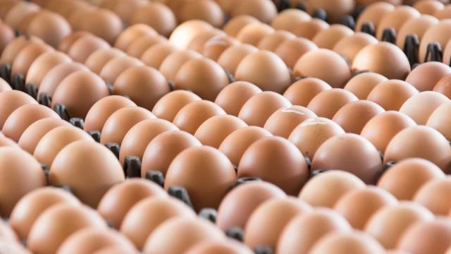 Bruxelas reforça ação para evitar novos casos como os ovos contaminados