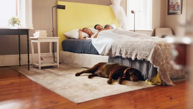Afinal, pode deixar o cão dormir no seu quarto