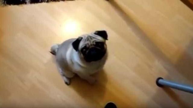 Homem ensinou cão a fazer saudação nazi e agora não encontra trabalho
