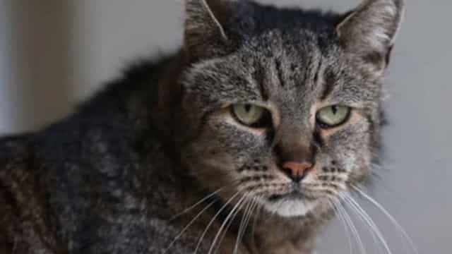 Morreu Nutmeg, o gato mais velho do mundo