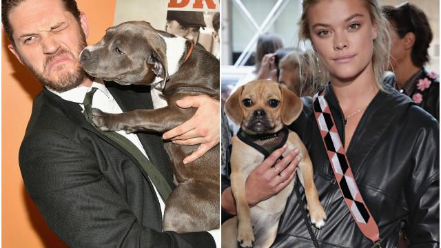 O carinho entre estas celebridades e os animais