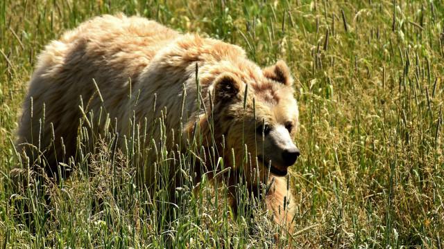 Conheça os maiores predadores do reino animal