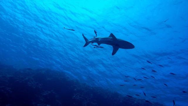 Turista americana morre ao ser atacada por tubarão