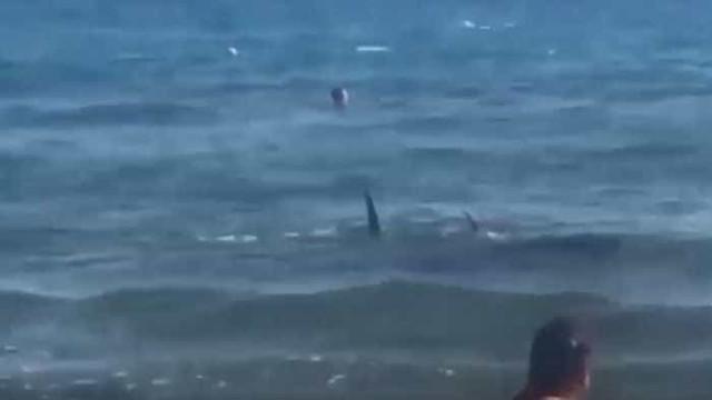 Turistas surpreendidos por tubarão em praia espanhola