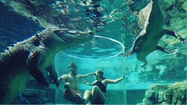Visitantes ficam cara a cara com crocodilos gigantes na Austrália
