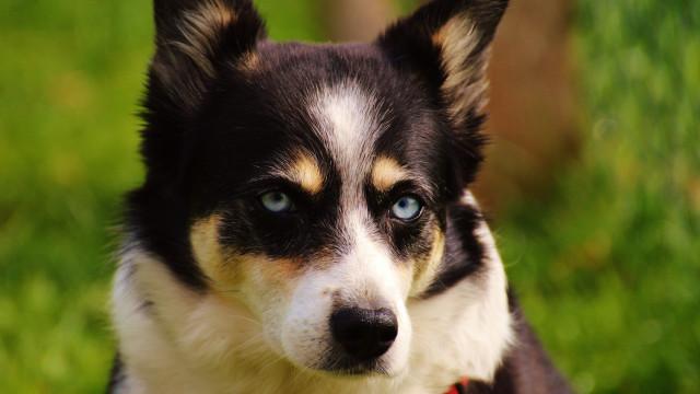 Este Estado vai proibir venda de cães, gatos e coelhos em lojas