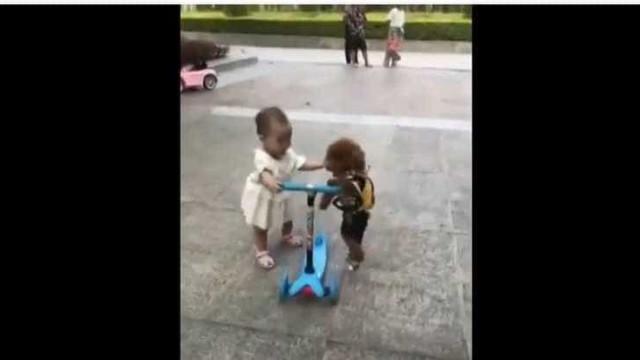 Cão 'rouba' trotinete a criança