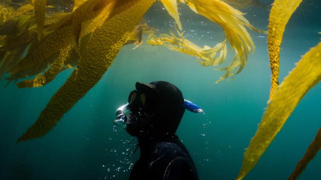 Apreendido material de pesca submarina em Aveiro