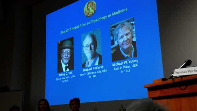 Nobel da Medicina para Jeffrey Hall, Michael Rosbash e Michael Young