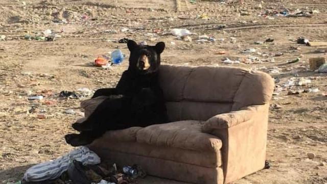 """Urso apanhado a relaxar num sofá. Só lhe faltavam """"as pipocas"""""""
