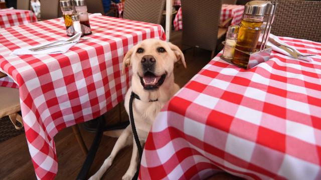 A partir de hoje, é permitida a entrada de animais em restaurantes