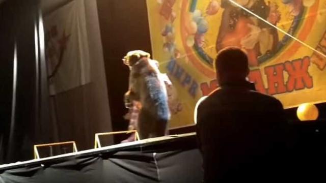 Urso ataca tratador no circo, mas espetáculo continua