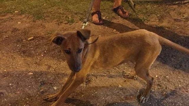 Casa dos Animais rejeita acolher cadela. Pedem-se justificações
