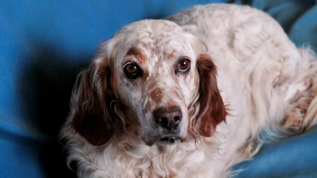 Mulher consegue licença paga para tomar conta de cão doente