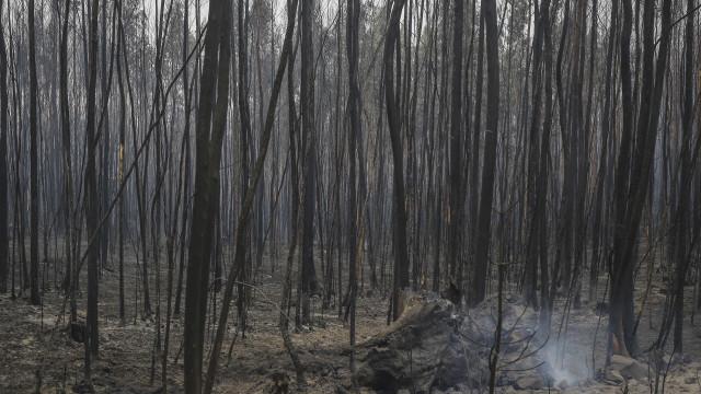 Algarve: Entre janeiro e outubro arderam mais de 290 hectares de floresta