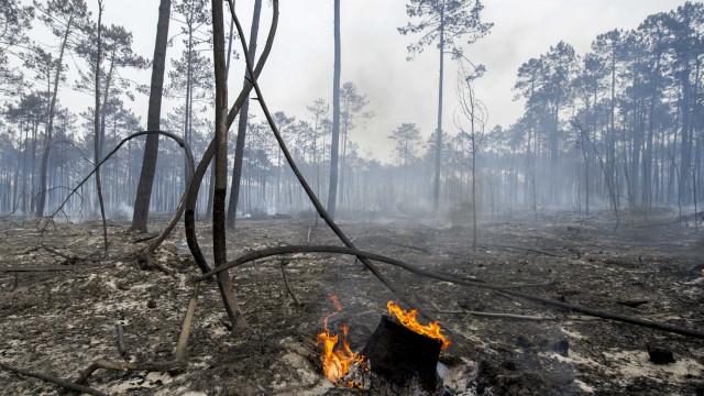 "PCP condena ""dicotomia inaceitável"" entre direitos ou floresta"