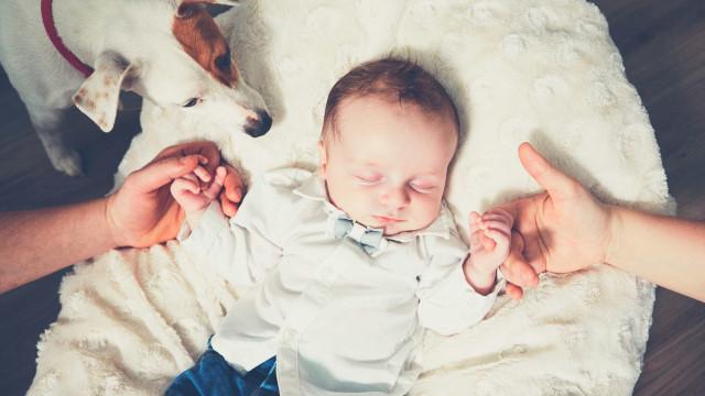 Saiba como preparar o seu cão para a chegada do bebé