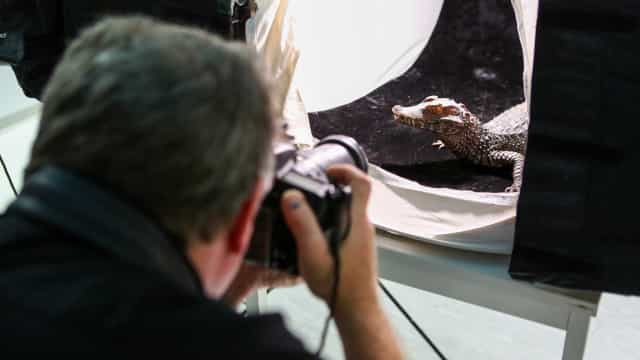 Animais do Zoológico de Lisboa posaram para exposição mundial