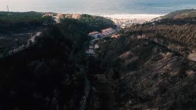 Imagens avassaladoras da enorme 'ferida aberta' no Pinhal do Rei