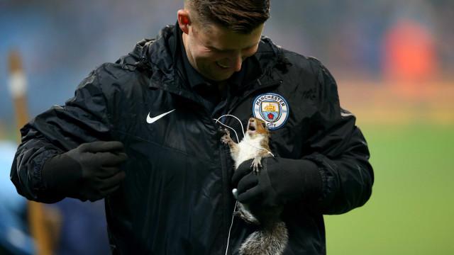 O pequeno invasor que provocou o caos no Manchester City-Wolverhampton