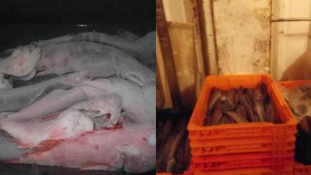 ASAE fiscaliza empresas de pescado. Quatro viram atividade suspensa