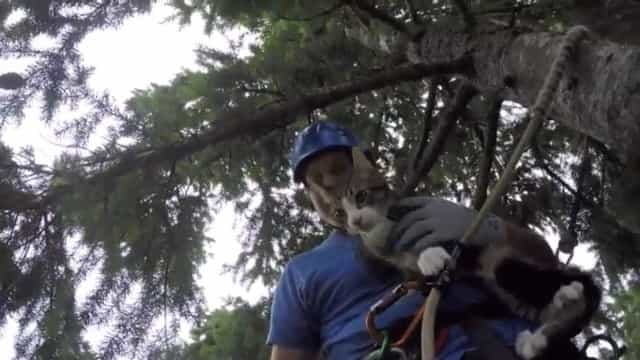 Se os gatos ficam presos nas árvores em Seattle, quem vai chamar?