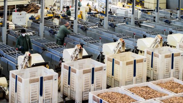 Corticeira Amorim aprova distribuição de dividendo de 18,5 cêntimos
