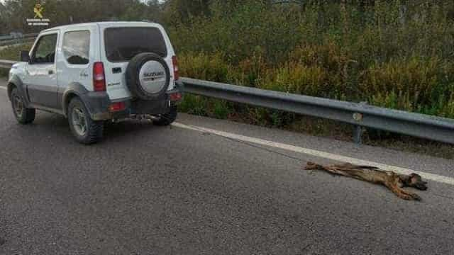 Homem atou cão ao carro e arrastou-o durante quilómetros
