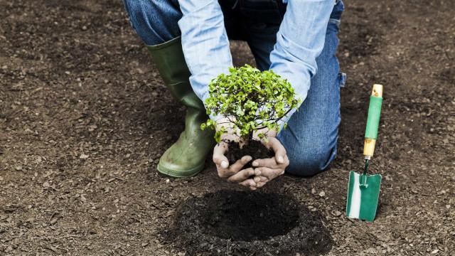 Zoomarine vai plantar 10 mil árvores com ajuda de 400 voluntários