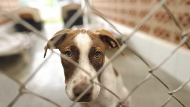 A missão (quase) impossível de arranjar um lar para um animal abandonado