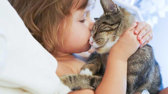Gatos podem 'travar' asma nas crianças