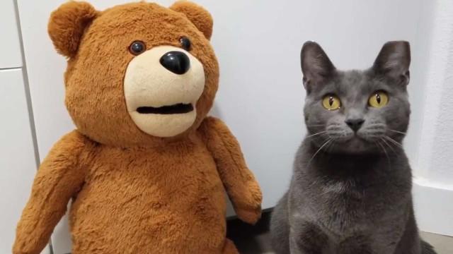 Está pronto para ter o seu próprio urso Ted?